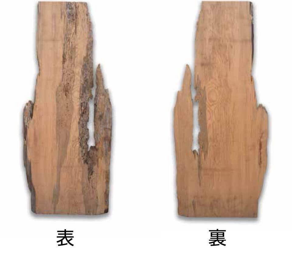 屋久杉 No.2